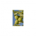 Common walnut (Juglans regia) 250g